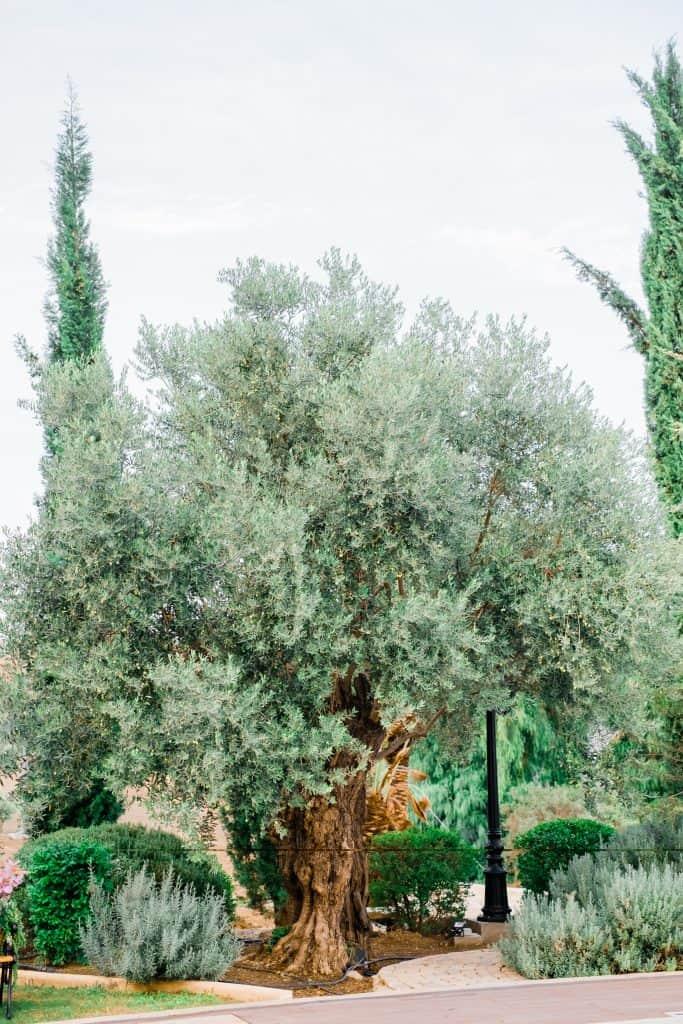 Ktima Oasis Cyprus - Weddings - Baptisms - Corporate Events - DSCF6687 2